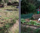 New allotment advice & raised beds