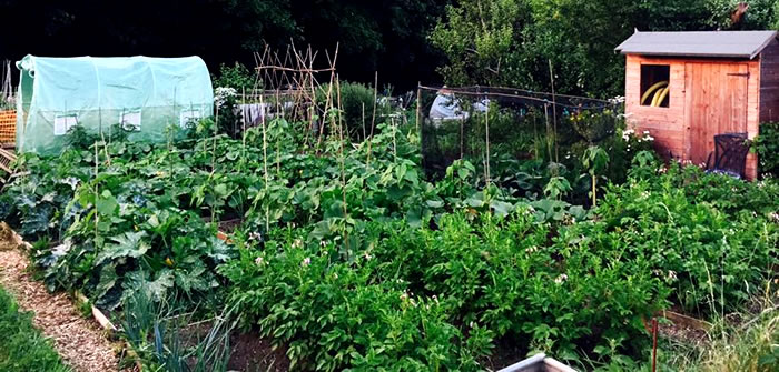Allotment Jobs for July
