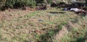 Allotment - Strimmed