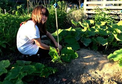 Redirecting pumpkin vines