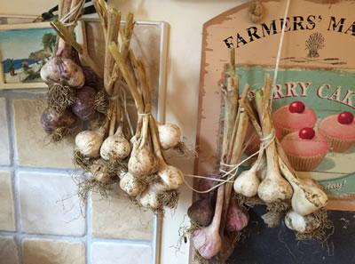 Dried Garlic in our Kitchen