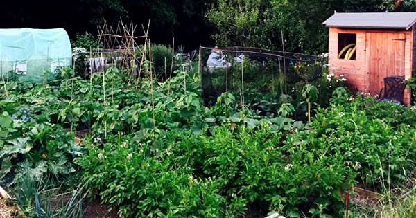 Garden centres in Avon, UK | Grow Like Grandad