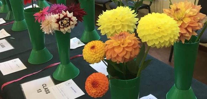 The Importance of Local Flower Shows