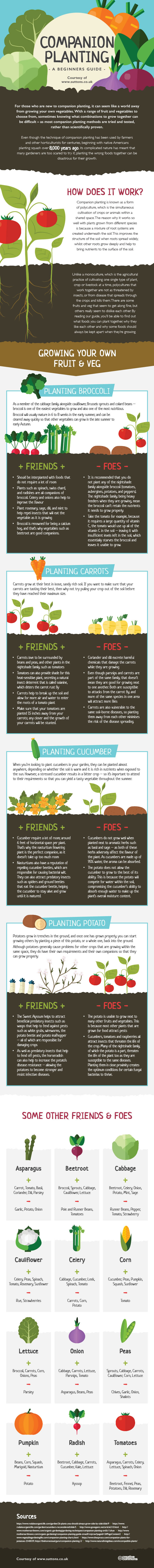 Vegetable companion planting chart