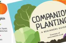 Vegetable companion planting