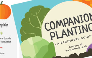 Vegetable companion planting