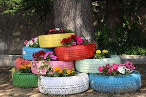 Growing flowers in tyres