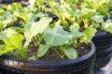 Are tyres safe to grow food in?