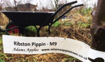 Planting a Dwarf Fruit Tree Orchard at Plot 44B