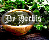 Herbs – Fennel, Oregano, Sage: Medieval Grow Your Own