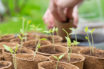 Germination Temperatures: Which vegetables can you sow in a frozen March?