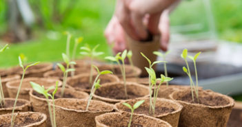 Germination Temperatures: Sowing vegetables in a frozen March