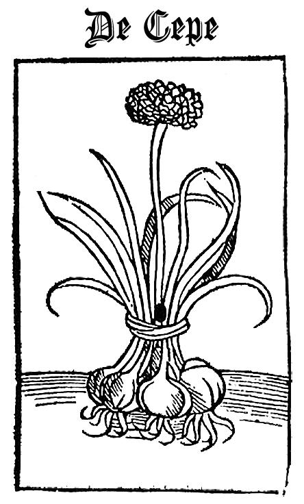 Onions - De Cepe