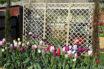 Screening my Greenhouse with Garden Trellis