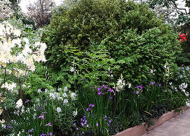 The Weston Garden: Top Plant Picks from Tom Stuart-Smith's Chelsea Garden