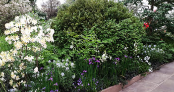 The Weston Garden: Top Plant Picks from Tom Stuart-Smith's Chelsea Garden