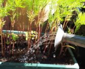 Tips for watering outdoor plants – When, Where, How?
