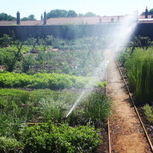Sprinkler at Hampton Court Kitchen Garden