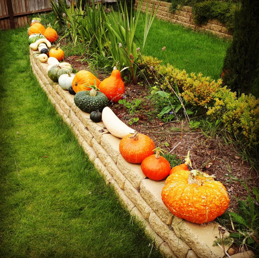 Some of my squashes and pumpkins