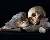 Bone meal, a gruesome fairy-tale fertiliser?
