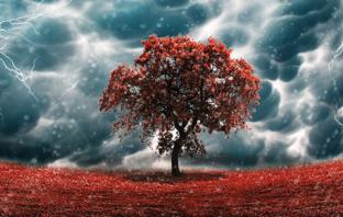 Lightning Fixation - Nitrogen