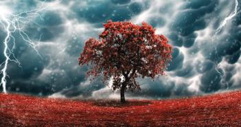 Fertiliser from Lightning Bolts and Crimson Clover