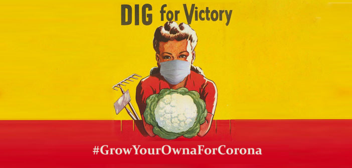 Why 'Dig For Victory' is vital in 2020… #GrowYourOwnaForCorona